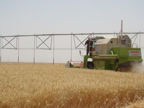 الزراعة : تسويق 5000 طن من محصول الشلب في بابل